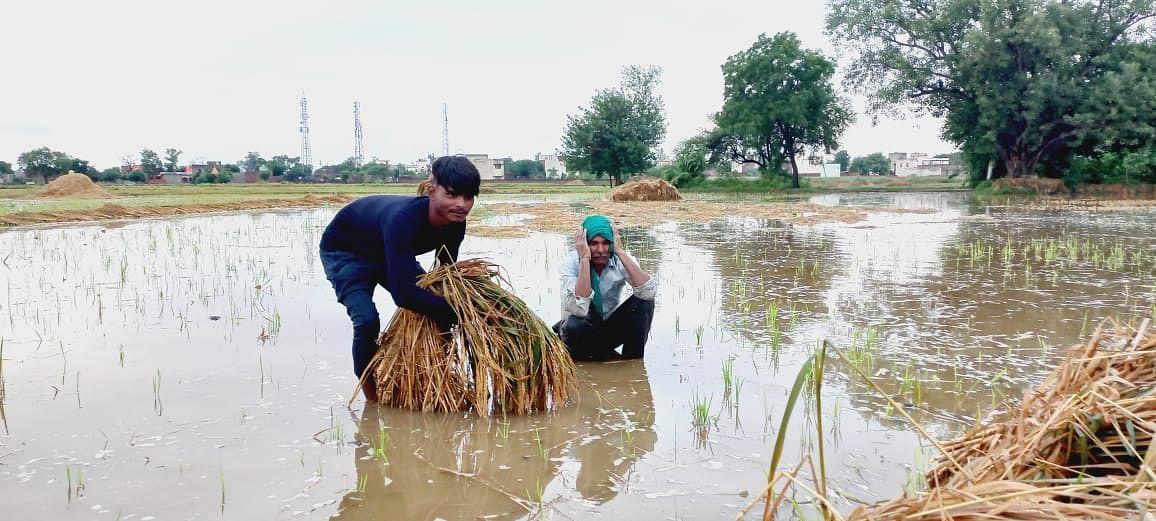 Agra News: तेज बारिश से करोड़ों की फसल तबाह और किसान परेशान, सरकार से मुआवजे की मांग
