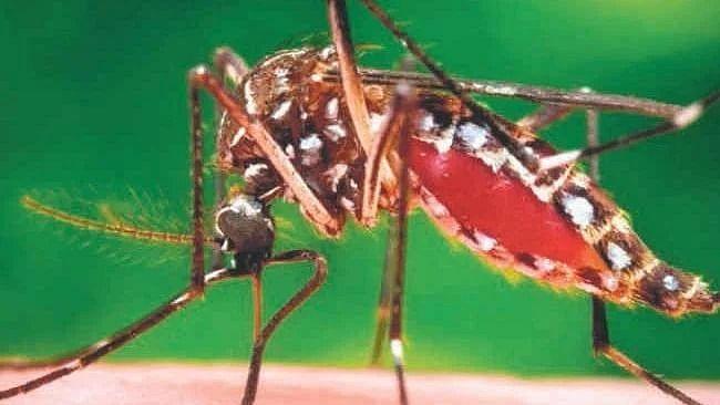 Kanpur News: कानपुर में डेंगू से मरने वालों की संख्या 100 के पार, स्वास्थ्य विभाग ने किया मानने से इंकार