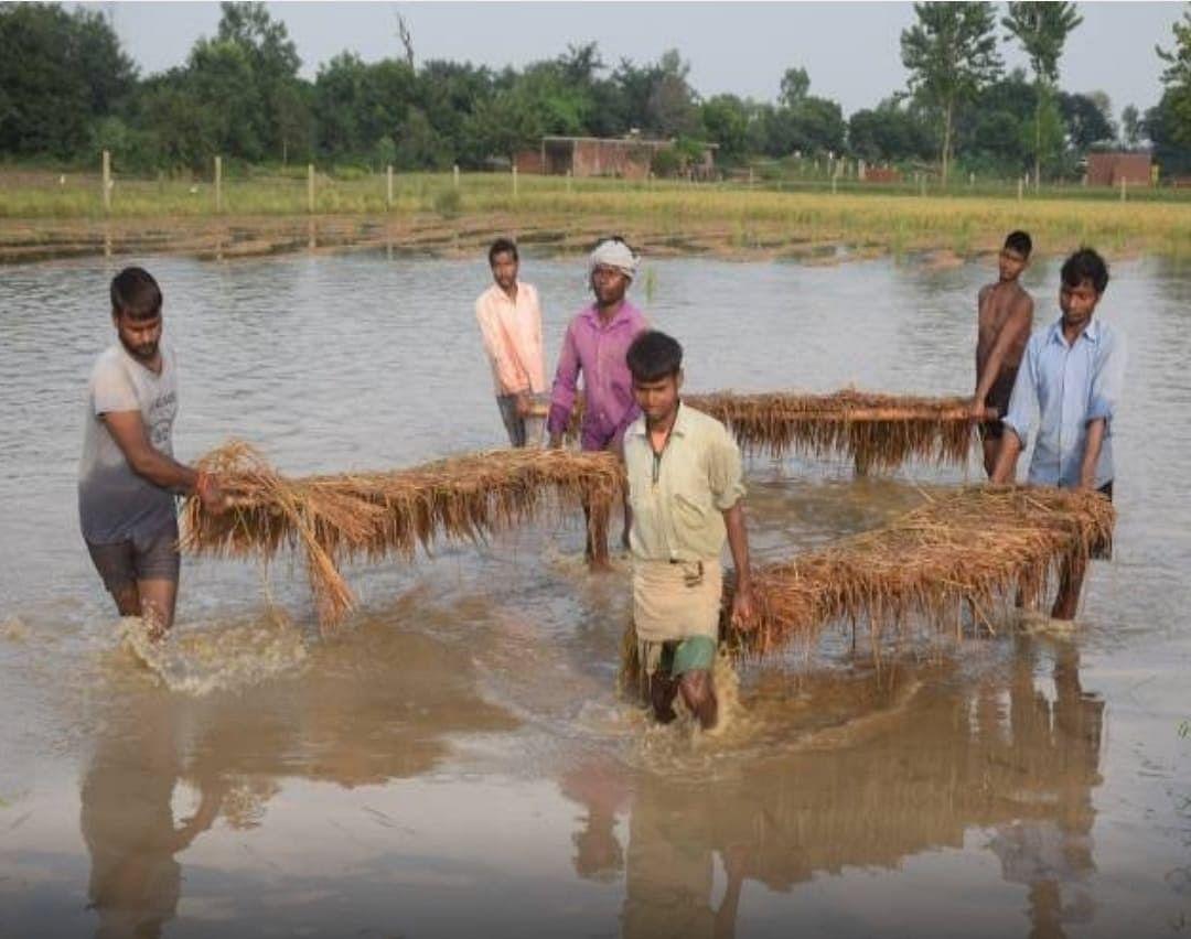 Bareli News : बारिश से फसल बर्बाद, बरेली के किसानों को राहत पहुंचाने में जुटा कृषि विभाग