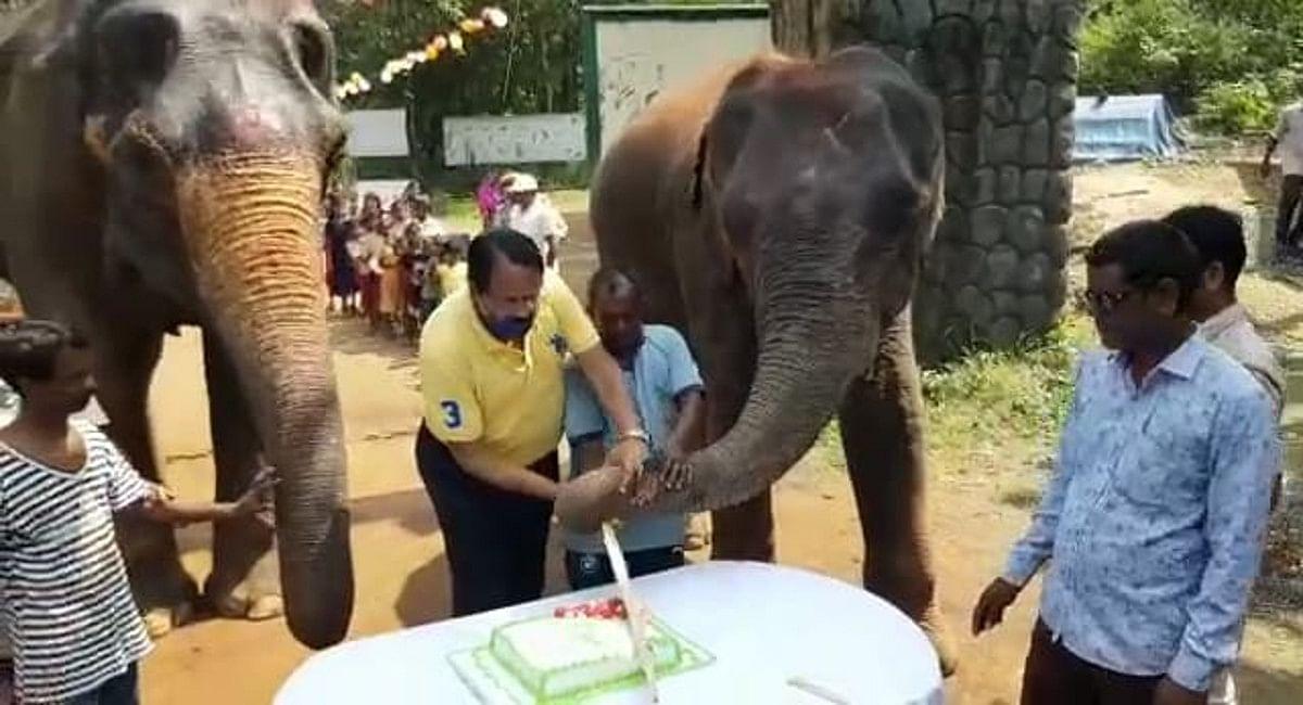 हथिनी 'गजनी' के बर्थडे पर काटा गया केक.