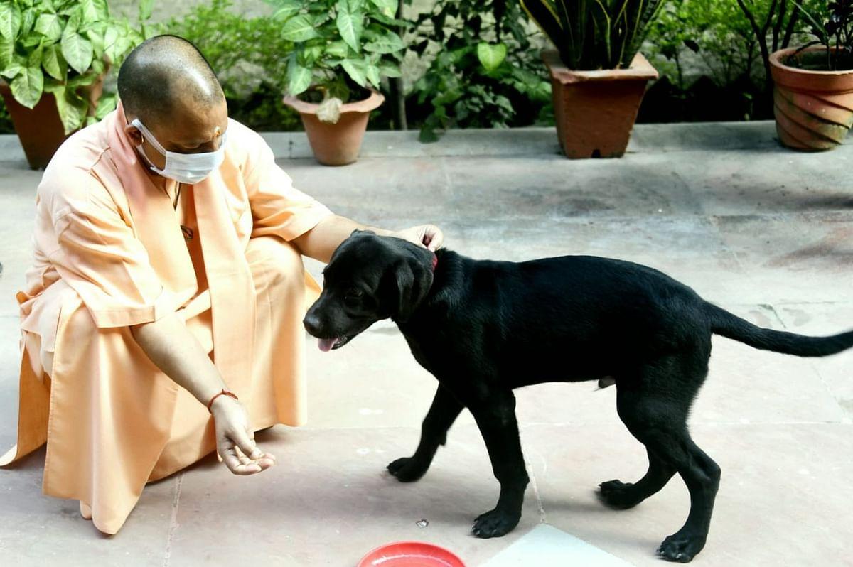 खास दोस्त गुल्लू के साथ खेलते दिखे CM योगी, पूछा हालचाल और हाथ मिलाना भी सिखाया