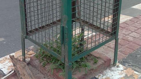 Agra News: आगरा में 70 हजार पौधों को जमीन निगल गई या आसमान? होगा सत्यापन