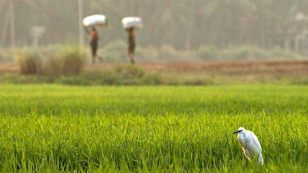 किसान आंदोलन के बीच पीएम मोदी सरकार ने यूरिया खाद पर बढ़ायी 500 रुपये की सब्सिडी