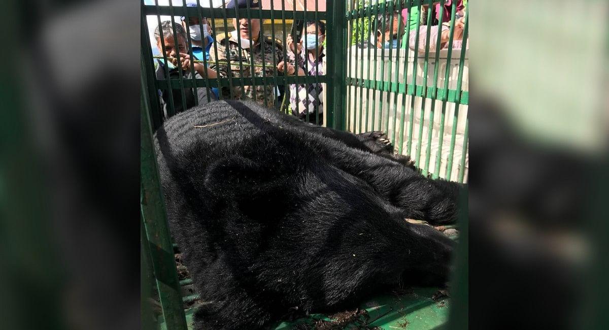 आधी रात को सिक्किम के राजभवन में घुसा भालू, दहशत में गुजरी लोगों की रात, ऐसे किया गया काबू