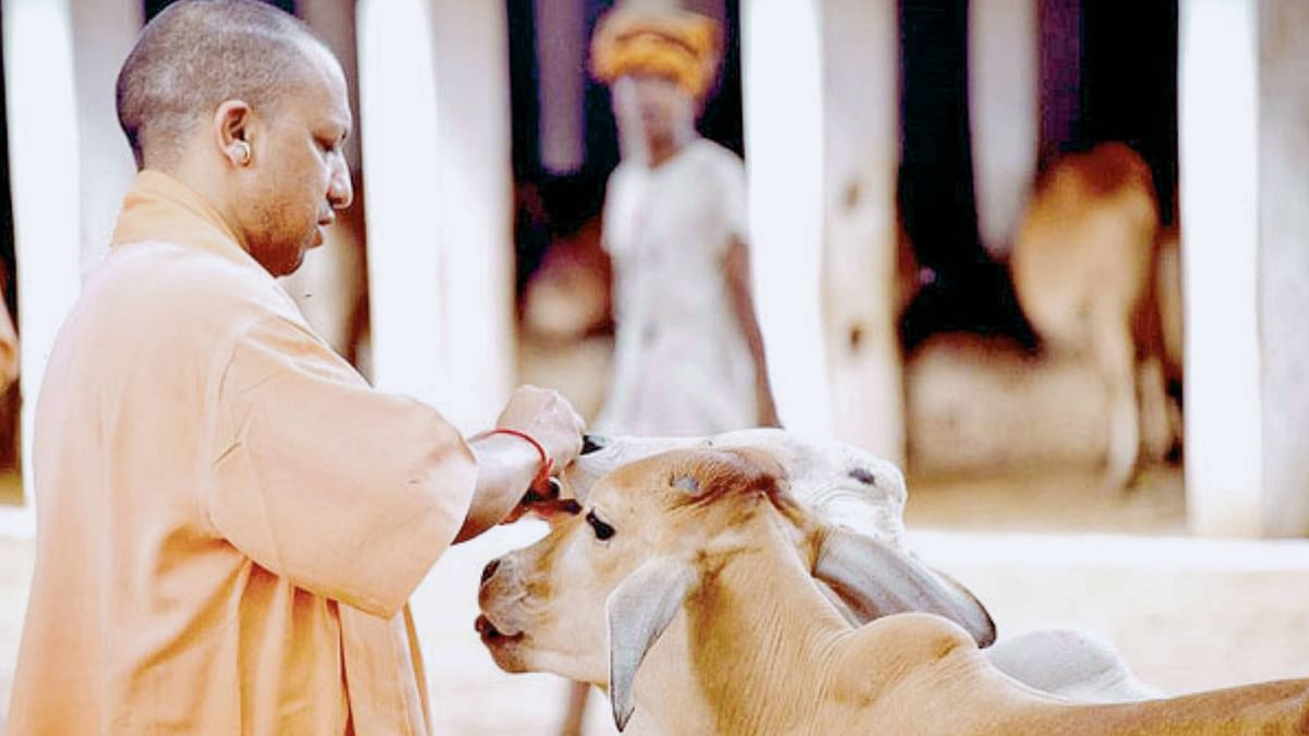 Ordinance against cow slaughter approved by Uttar Pradesh Cabinet