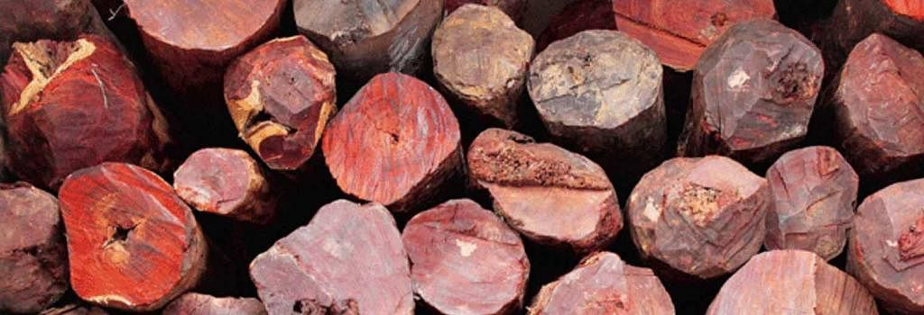 """Menace"" of  Red Sanders Woods Smuggling catches Madras HC's attention; Court seeks details of cases registered and more"