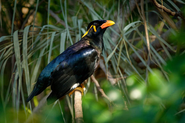 """Cruel, unethical, illegal:"" Calcutta High Court takes suo motu cognizance of illegal smuggling of endangered birds"