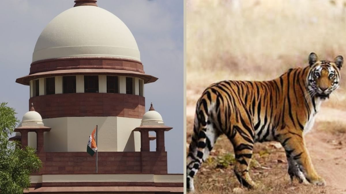 """Tigress Avni was shot like a terrorist, was not a man eater:"" Contempt petition in Supreme Court"