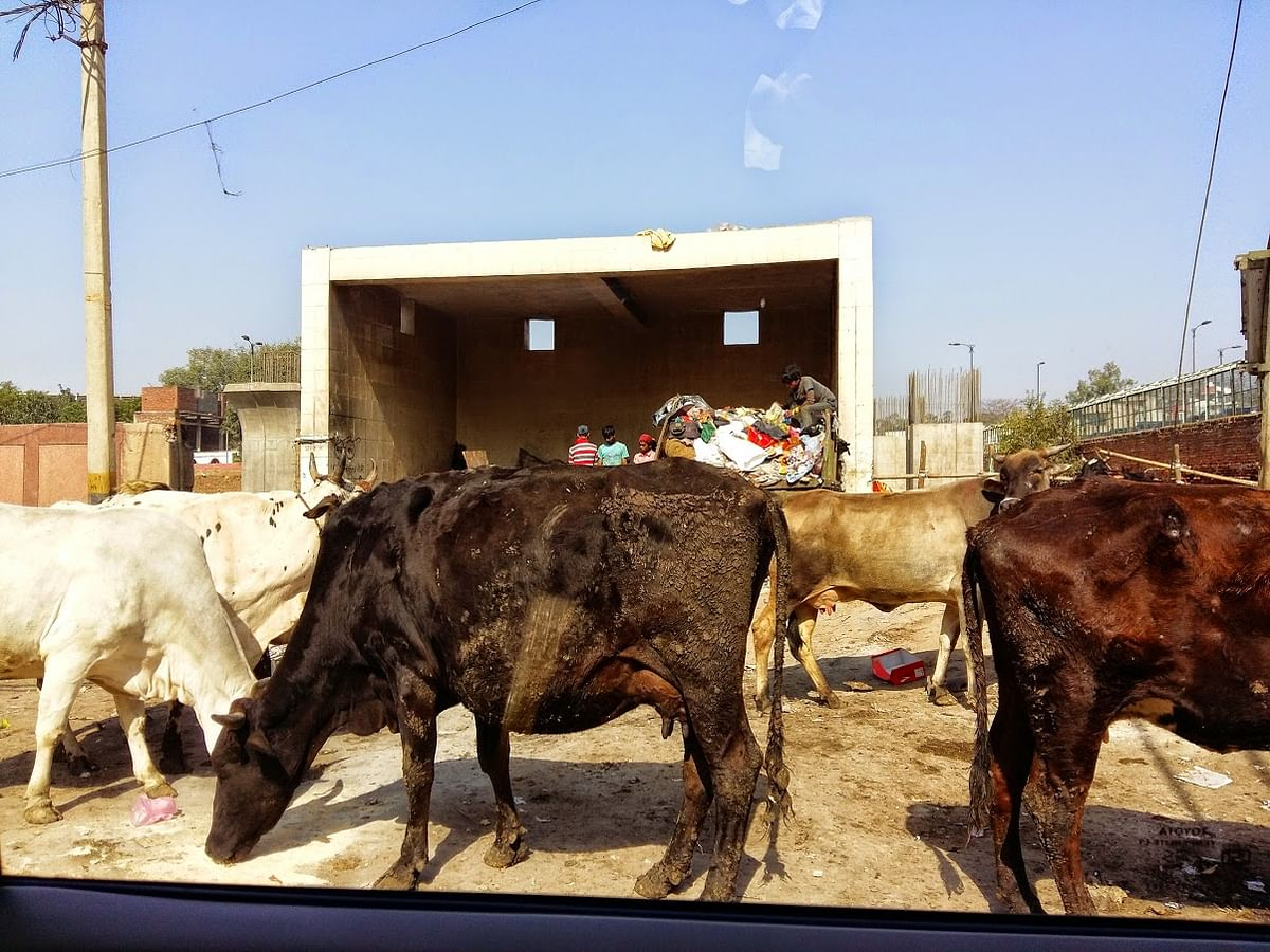 Petitioner runs a slaughterhouse serving personal interest: Akhil Bharat Krishi Goseva Sangh moves Supreme Court to defend 2017 Cattle Rules