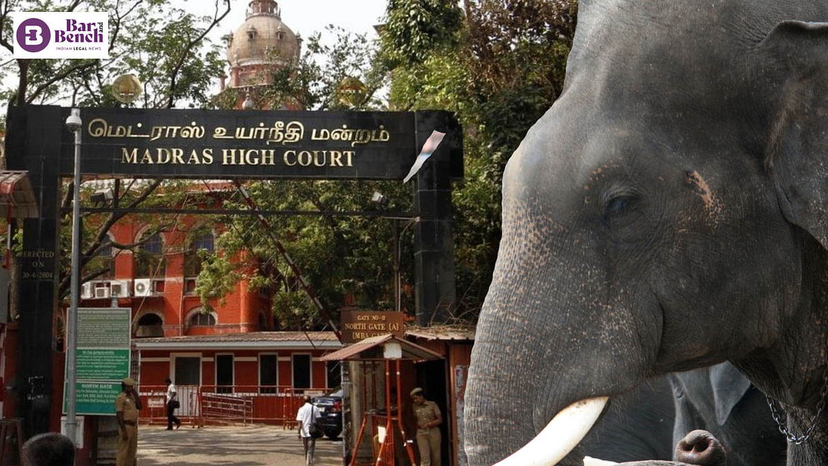 Ensure no further elephant is taken into captivity: Madras High Court to State
