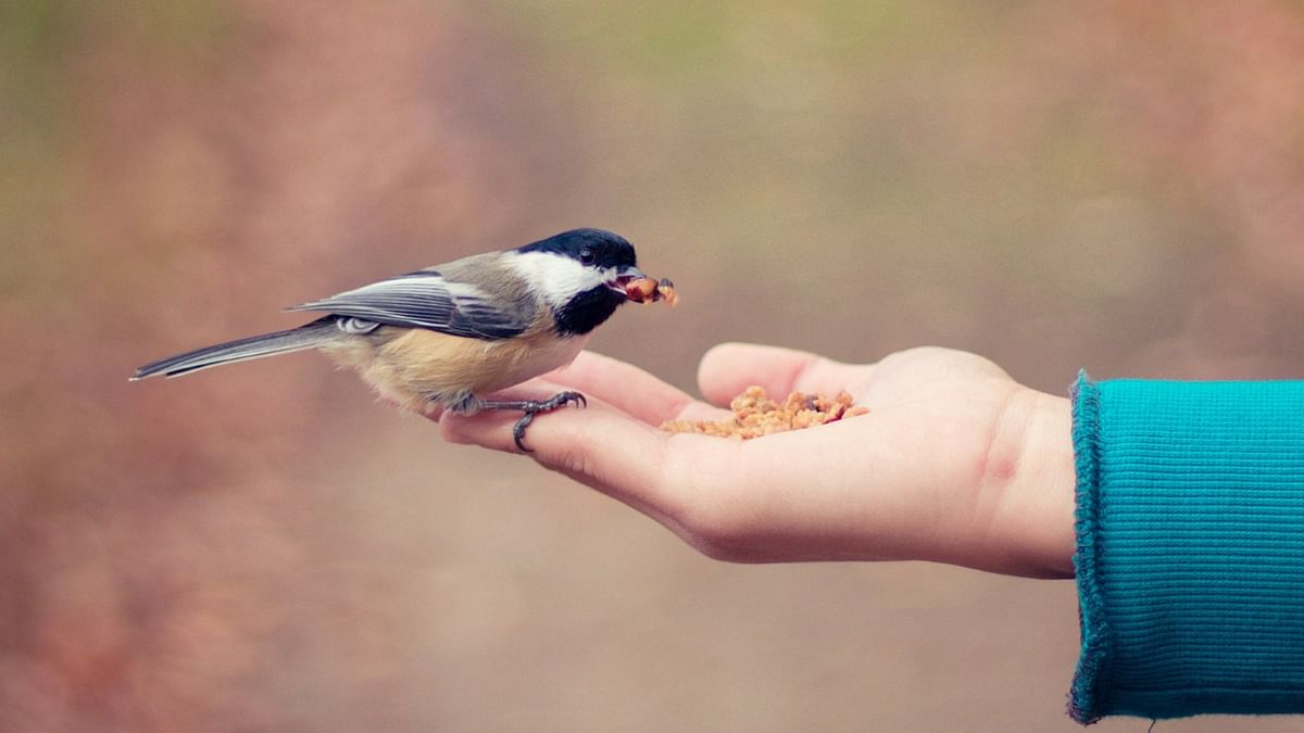 Mumbai Court restrains animal activist and family from feeding birds from apartment window due to nuisance caused to neighbours