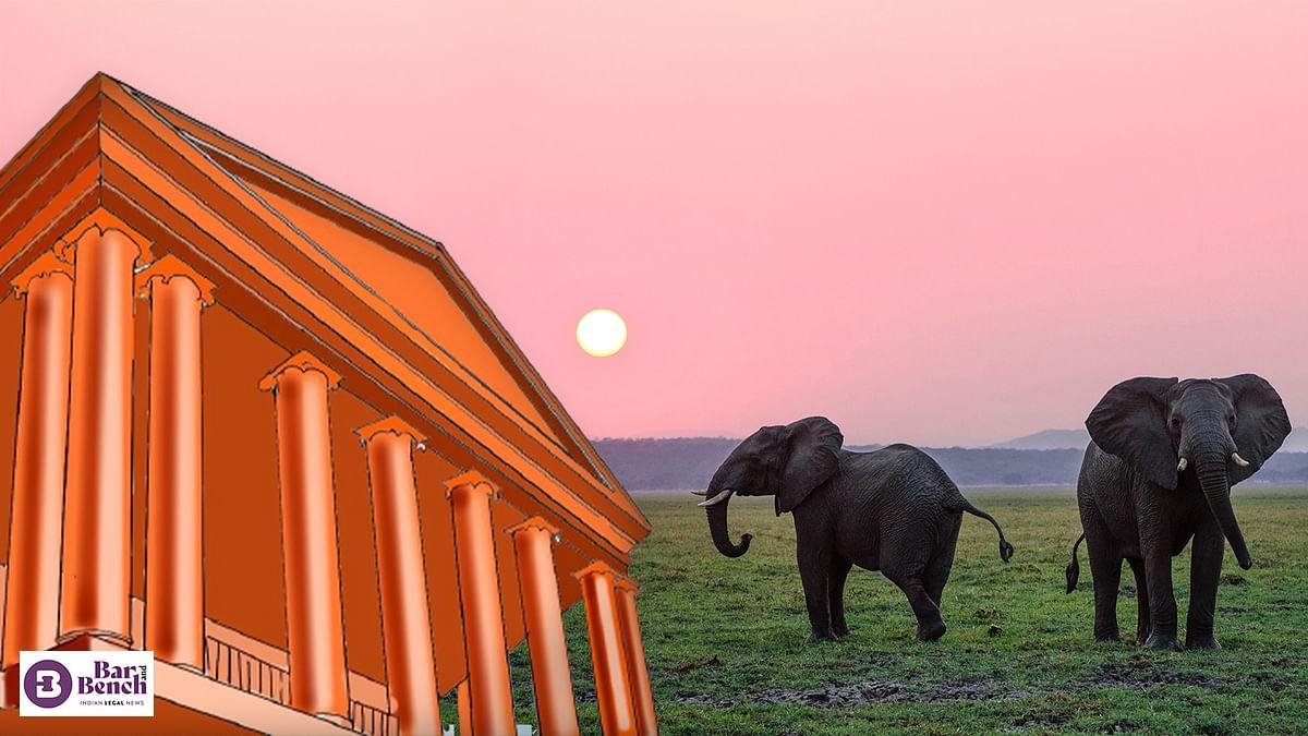 Elephants belong to forest, not temple: Karnataka High Court