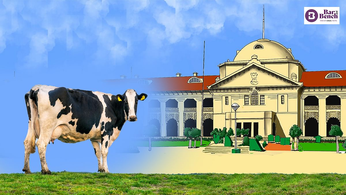 [BREAKING] Cow is part of culture of India; should be declared as national animal, made part of fundamental rights: Allahabad High Court