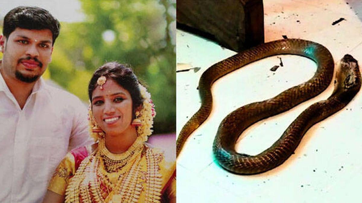 [BREAKING] Uthra murder: Kerala court holds husband guilty of killing wife using cobra