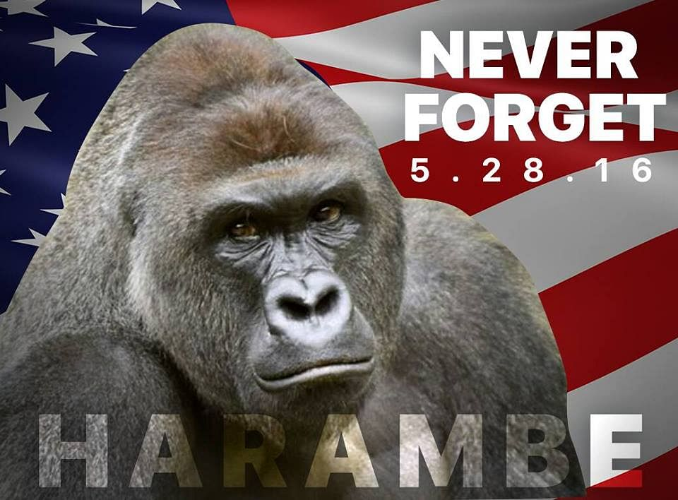These law students are organising a candle light vigil for Harambe