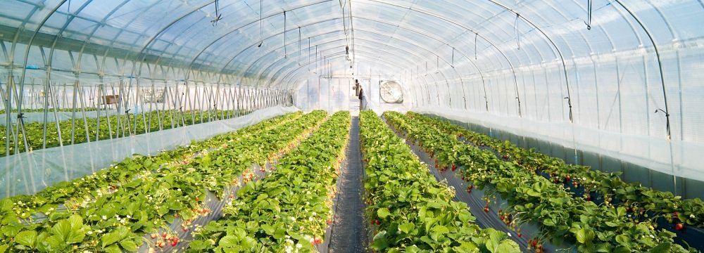 PSL, D&V and APM & Co. act on EPC Industries-Top Greenhouses JV