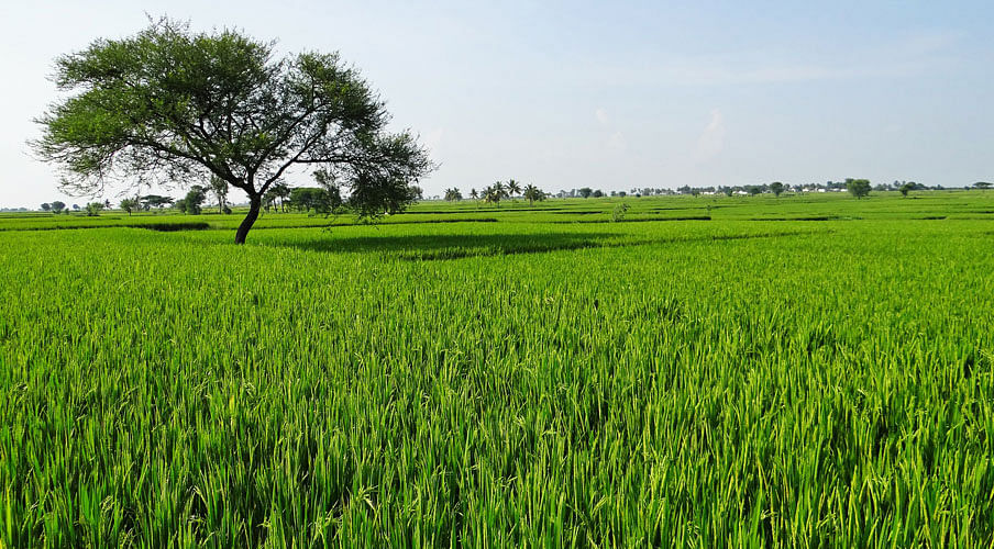 Delhi HC sets aside Centre's decision to restrict production of Basmatirice to areas in the Indo-Gangetic plain