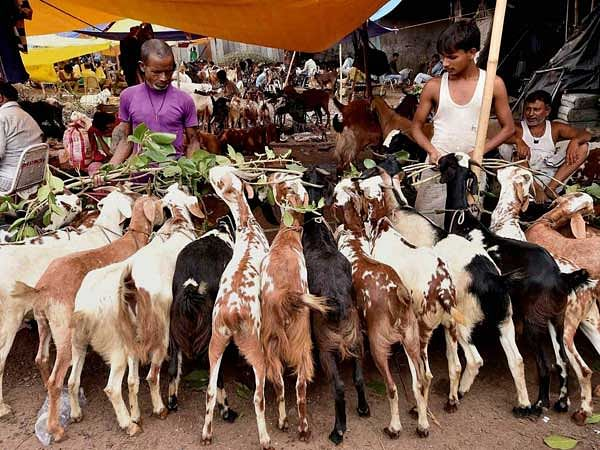 Bombay HC prohibits animal slaughter within residential flats in Mumbai for Bakri-Eid [Read Order]