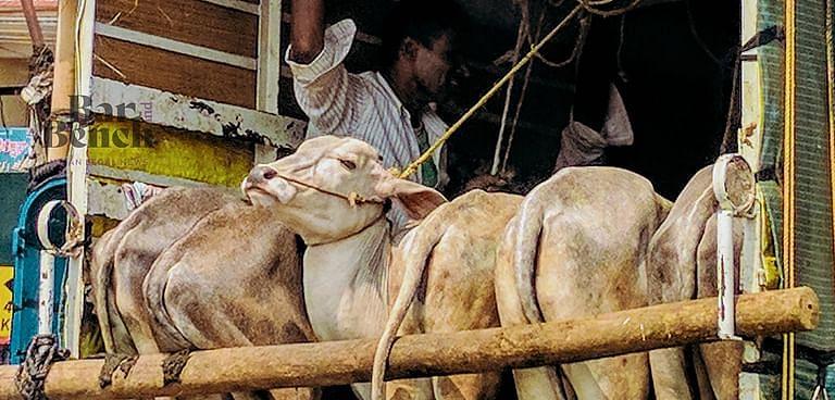 """""""पशु आजीविका का एक स्रोत है, अभियुक्त को दोषी करार दिए जाने से पहले पशुओं को जब्त नही किया जा सकता"""""""