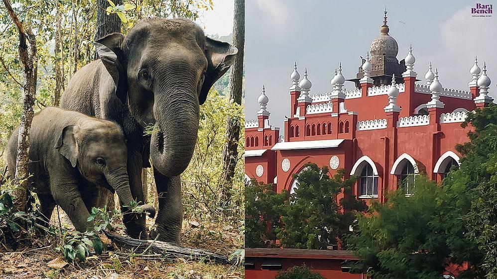 Elephants and Madras High Court