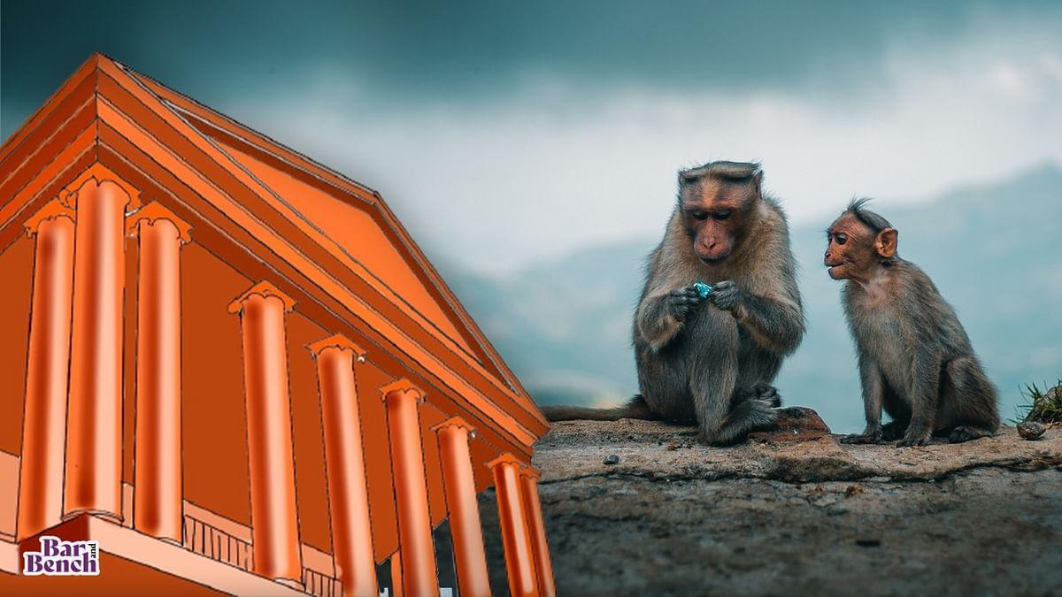 ಮಂಗಗಳ ಮಾರಣ ಹೋಮ ಪ್ರಕರಣ: ಹಾಸನ ಎಸ್ಪಿ, ಉಪ ಮುಖ್ಯ ಅರಣ್ಯ ಸಂರಕ್ಷಣಾಧಿಕಾರಿ ಹಾಜರಾತಿಗೆ ಹೈಕೋರ್ಟ್ ಸೂಚನೆ