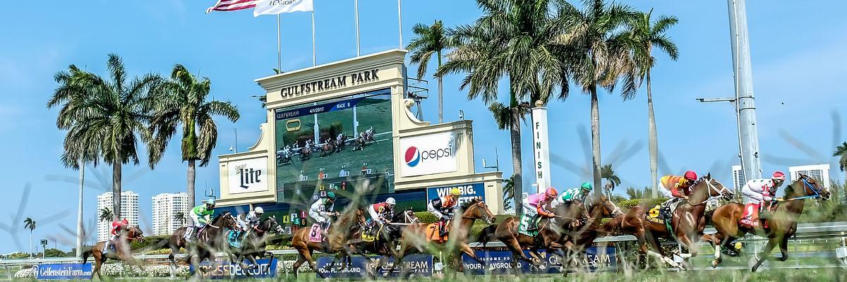 Turf racing at Gulfstream Park.