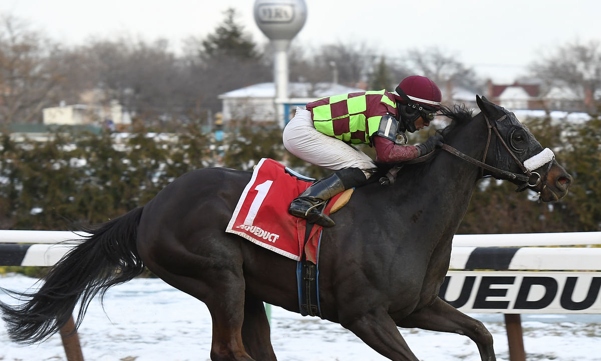 Thoroughbreds: McMudder aims to pick who's top in the slop