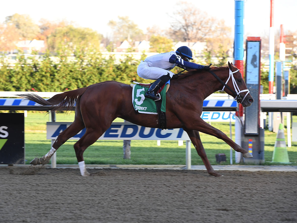 Thoroughbred Thursday: Garrity picks the horses at Aqueduct