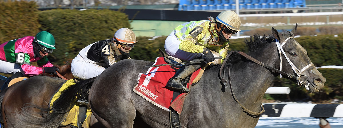 Sunny Ridge, winning the 2017 Stymie at Aqueduct, is one of RT's picks in today's Westchester at Belmont.