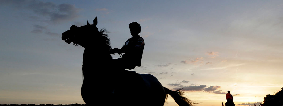 Horses arrive at sunrise for work outs at Belmont Park on June 7 (Seth Wenig)
