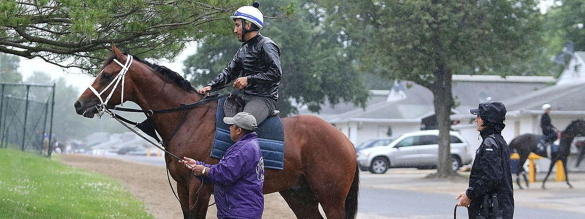 Maximum Security, ridden by exercise rider Edelberto Rivas, rests during a workout at Monmouth Park on June 13 (Bill Denver/EQUI-PHOTO)