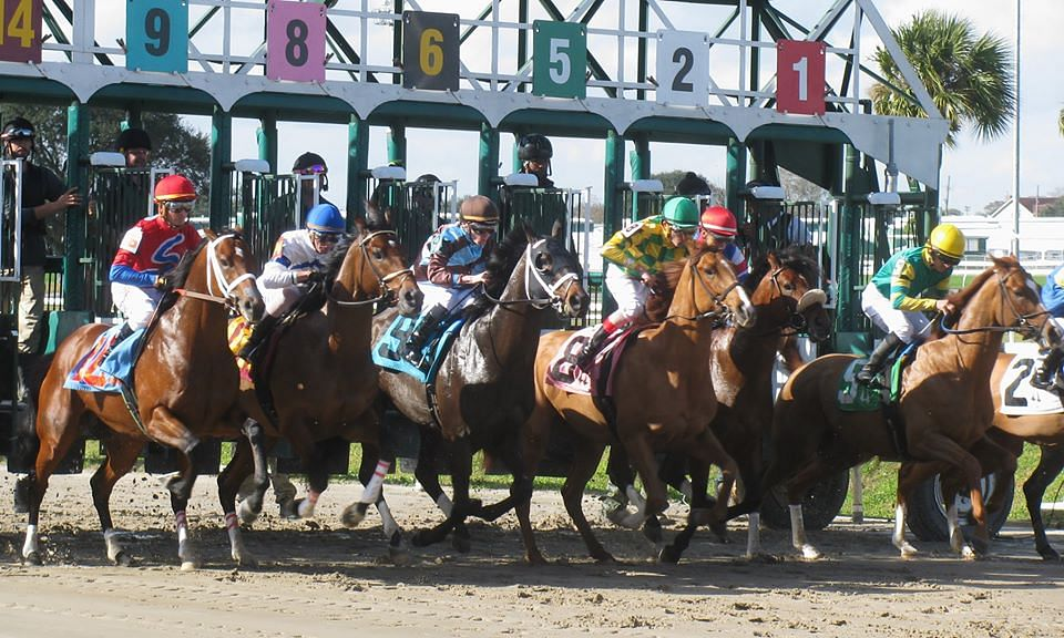 Bored already? Garrity has Wednesday horse action at Tampa Bay Downs, Gulfstream Park, Sam Houston, and the Fair Grounds