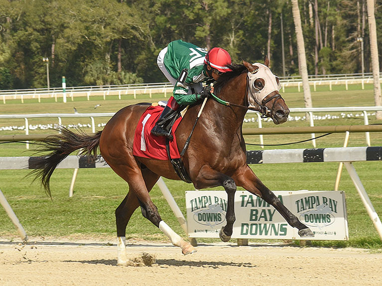 Garrity picks a six-pack of horse races at Gulfstream Park, Tampa Bay Downs, and Oaklawn Park