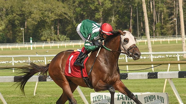 Horse Racing Wednesday: Garrity plays Pick 3 at Tampa Bay Downs