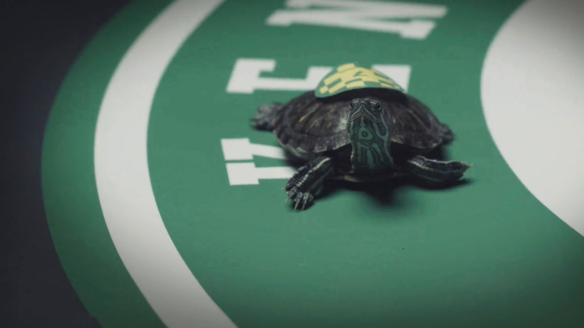 Turtle Power: With Kentucky Derby dashed, Kentucky Turtle Derby looks to fill the void