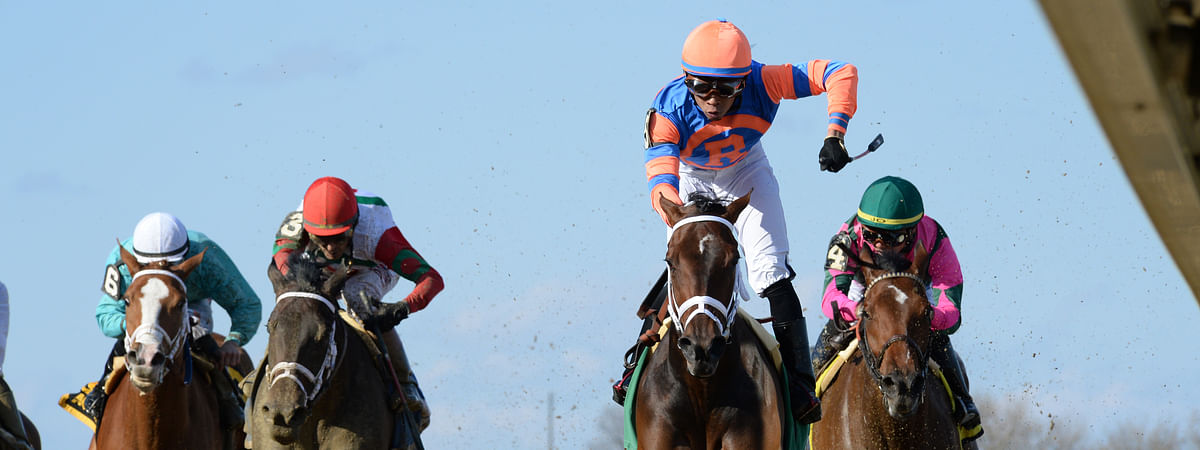 Always Shopping won The Gazelle last April in New York. RT likes him today at Gulfstream.