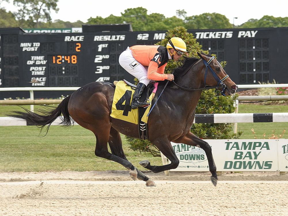 RT and SmartCap pick the Monday 2nd at Tampa Bay Downs and likes a morning line 7/2
