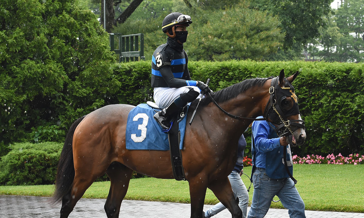 Fauci, shown here at Belmont in June of 2020, is Garrity's pick to win today's $85,000 Skidmore Stakes at Saratoga