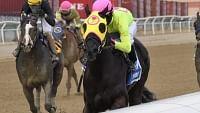 Garrity's Saturday Stakes picks 8 races  at Aqueduct, Keeneland, Oaklawn, Santa Anita – 3 Kentucky Derby preps