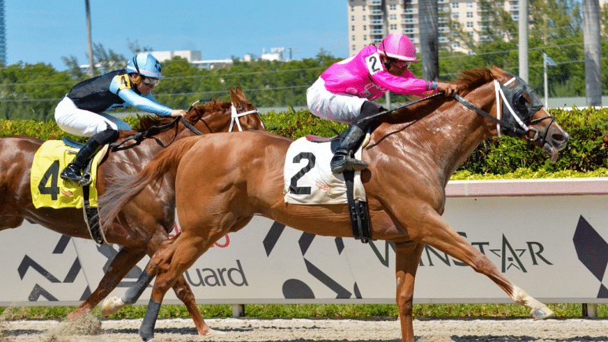 Gulfstream Park Friday: God's Tipster picks claimers in the 2nd and 8th races