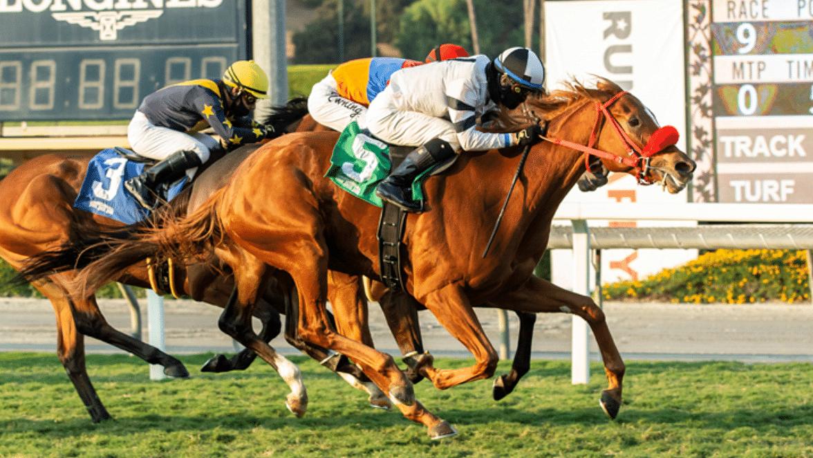Garrity's Saturday Stakes picks NY-bred races at Belmont & the Snow Chief, San Juan Capistrano at Santa Anita