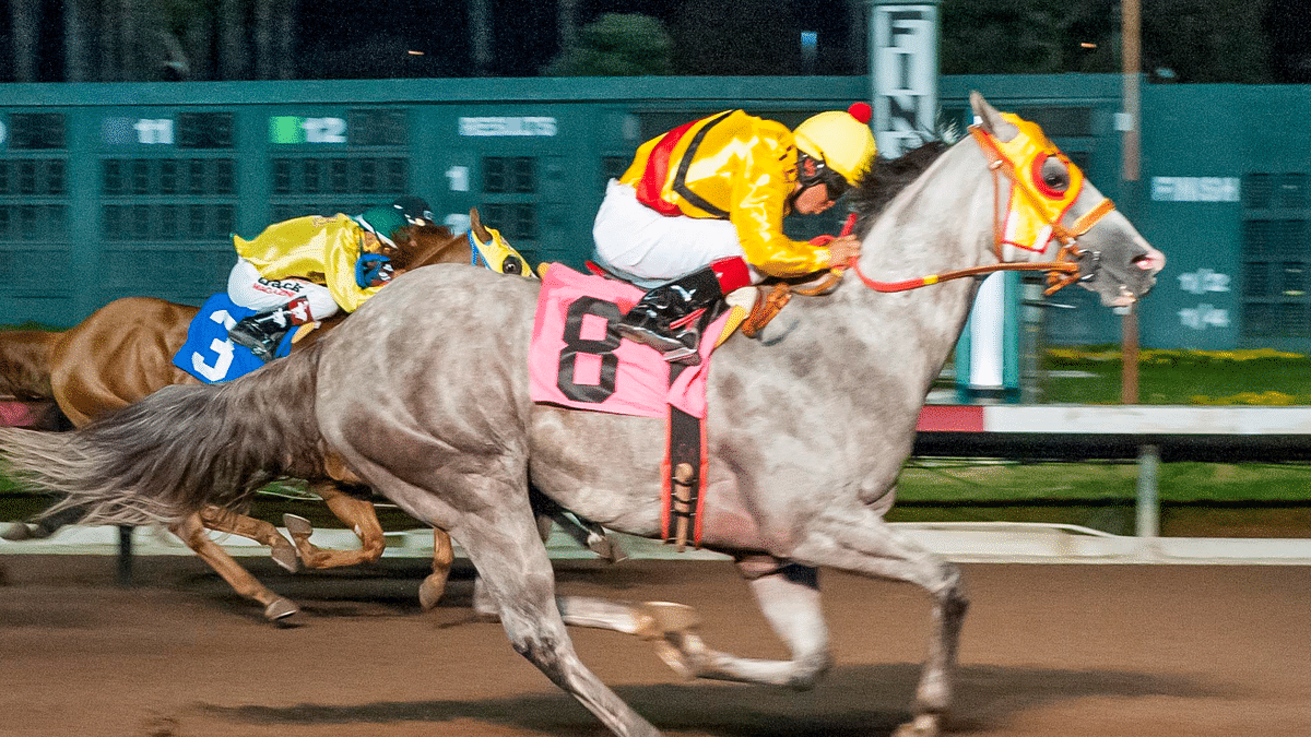 Garrity's Sunday Stakes picks races at Gulfstream Park, Belmont, and Los Alamitos