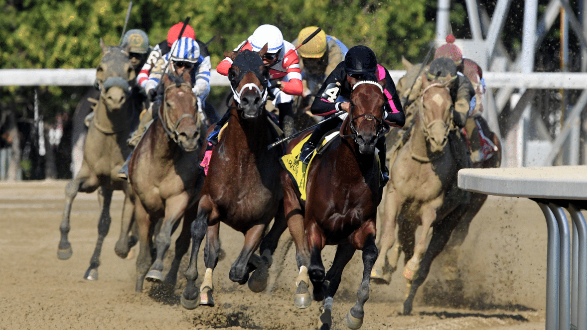 Belmont Park and Churchill Downs Saturday: God's Tipster picks 4 races each track, likes Art Collector, Sprawl