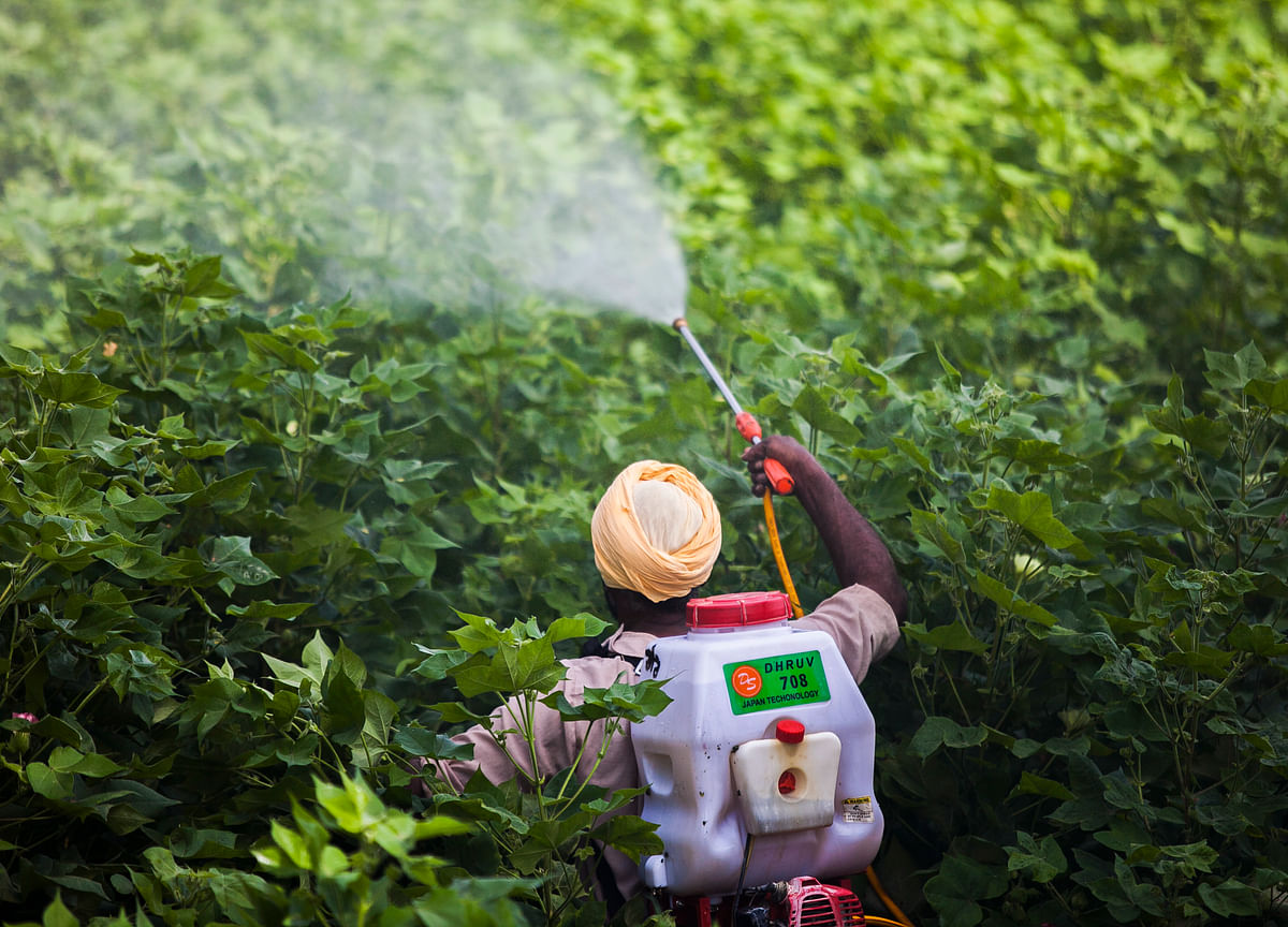 Government's Proposal To Ban 27 Pesticides Will Hurt Agrochemical Firms And Farmers, Analysts Say