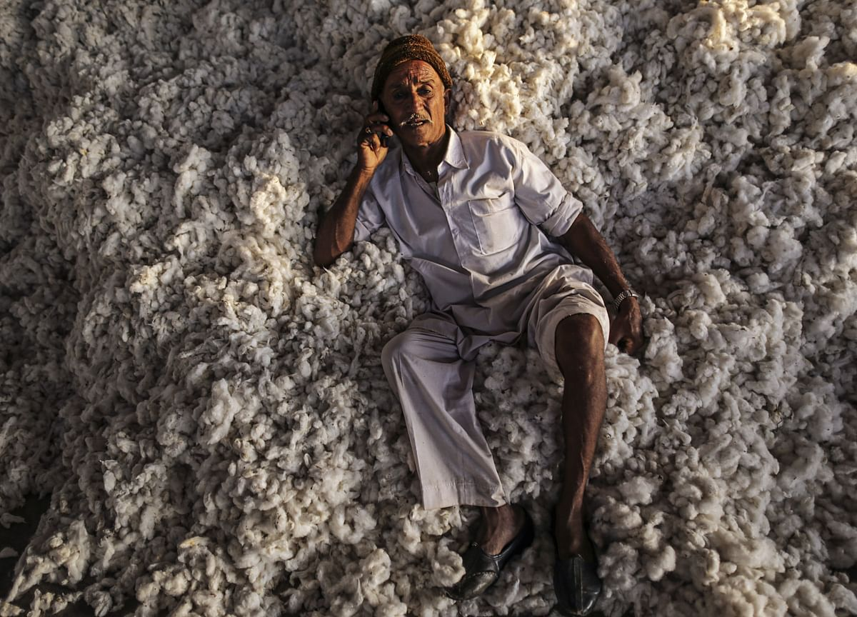 As A Genetic Revolution Collapses, Vidarbha's Cotton Farmers Dread Coming Season
