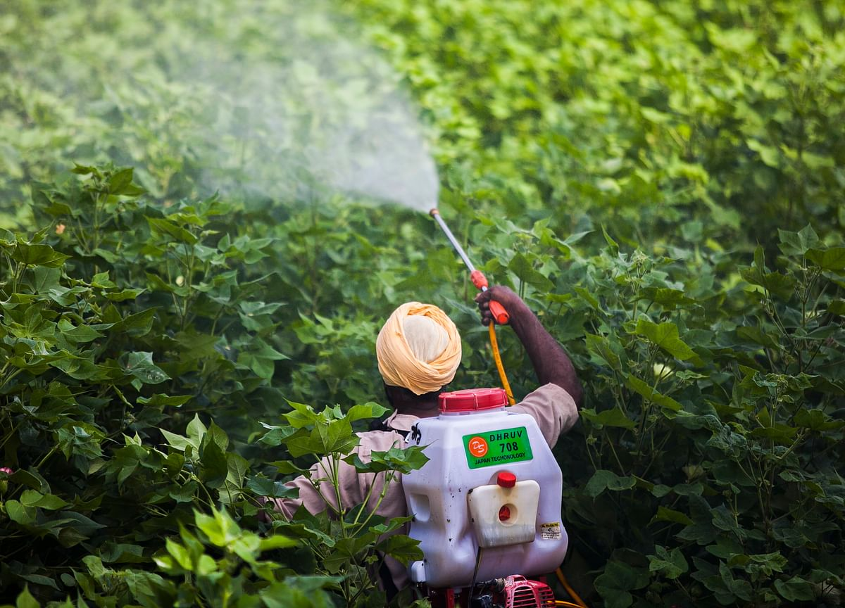 Insecticides India Expects New Product Launches To Aid Revenue In FY20
