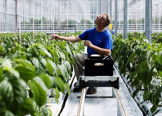 The Chaos That The Monsanto Patent Battle Has Become