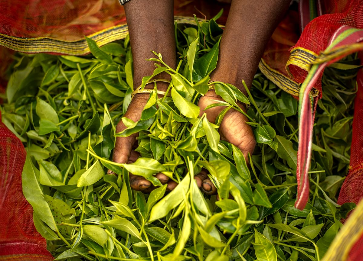 Budget 2019: Tea Industry Seeks Exemption From TDS On Cash Withdrawal