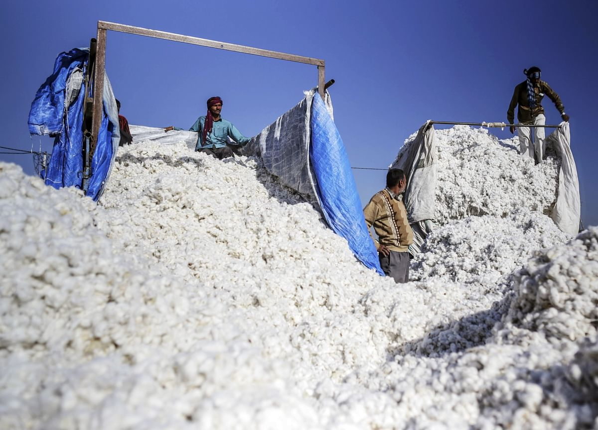 China Demand for Bananas to Cotton Drives Asia Export Rebound