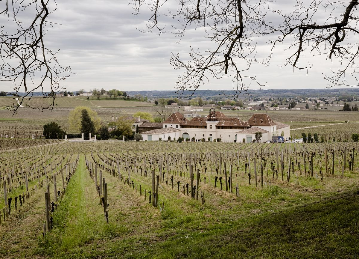 Bordeaux, Home to $4,000 Chateau Petrus, Ravaged by Spring Frost